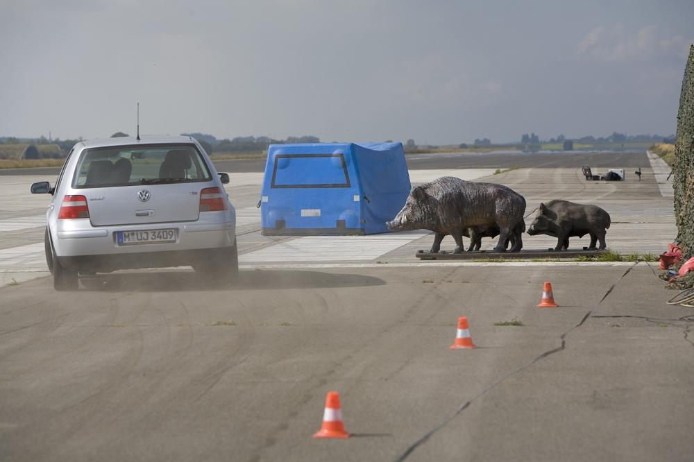 Symbolfoto: ADAC-Ausweichsimulation mit Wildschweinrotte