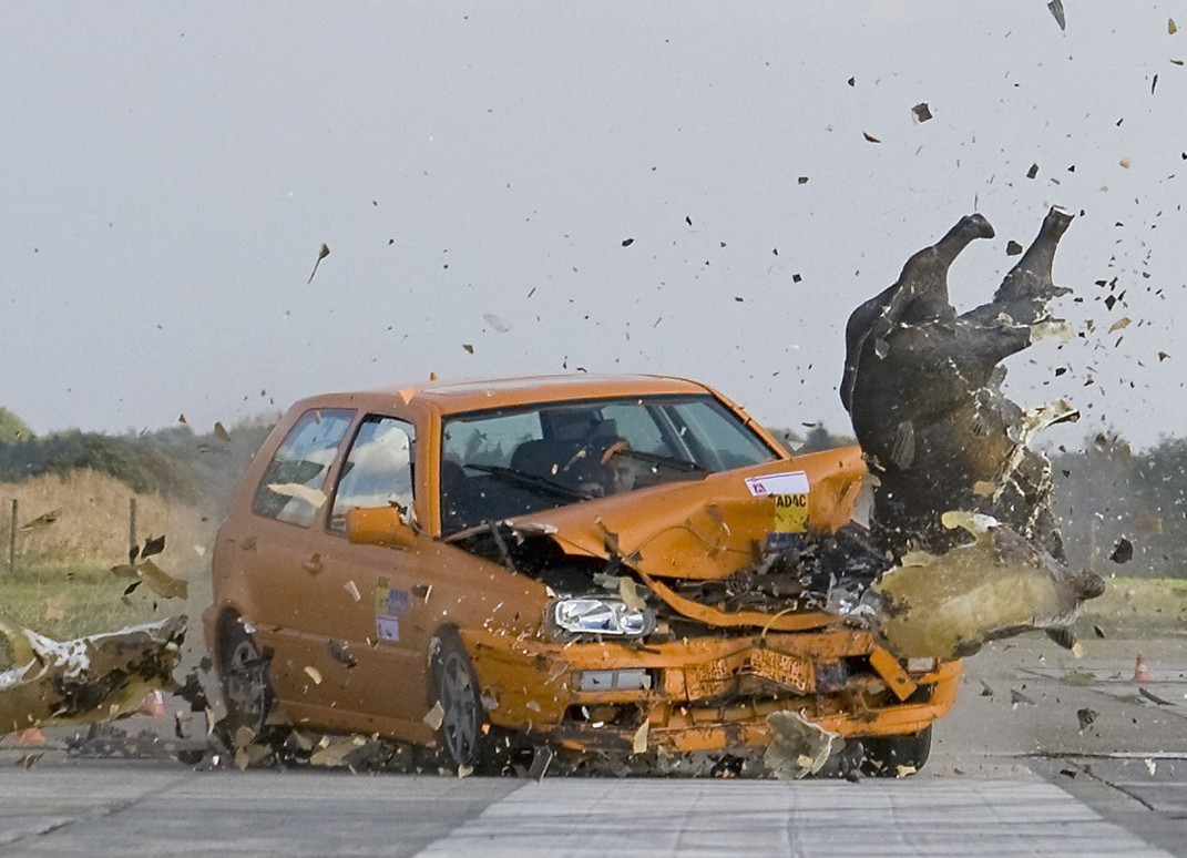 Crash mit Wildschwein - Dummy - Symbolfoto der ADAC-Pressestelle (Quelle: ADAC)